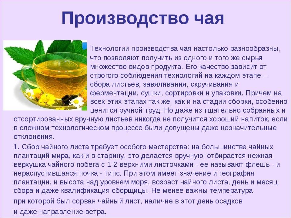 Ферментация чая: что это, как происходит процесс, особенности для разных видов, отличия от неферментированного