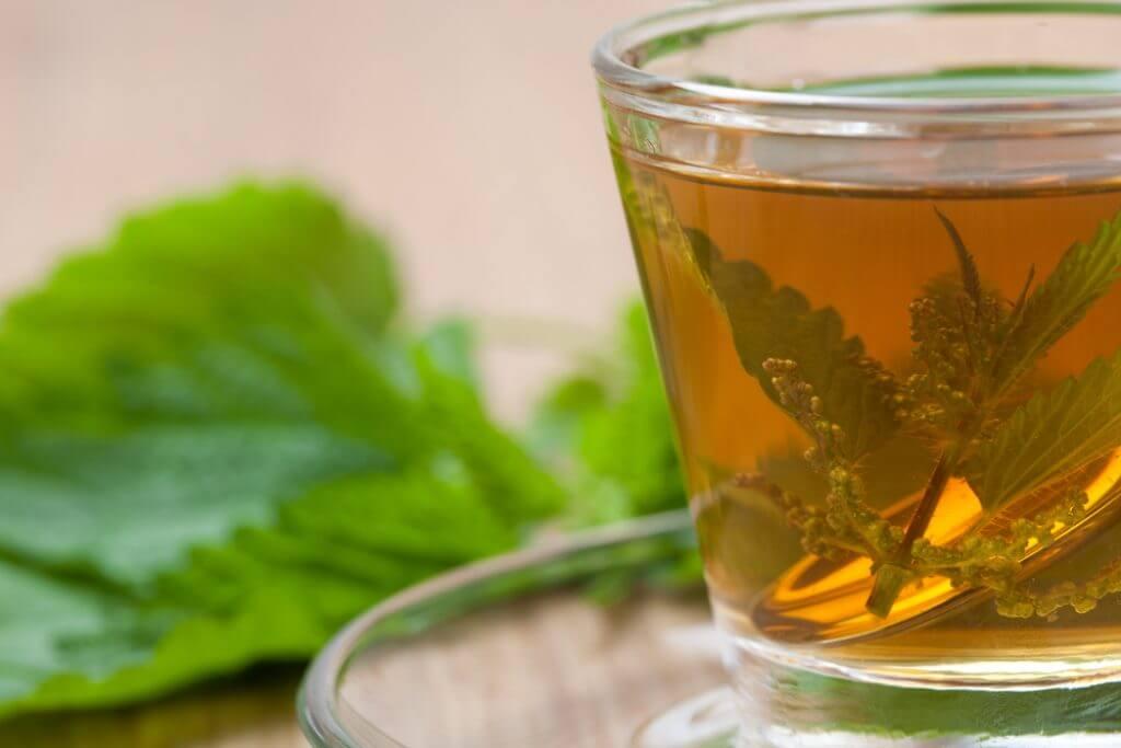 Чай из крапивы: польза и вред, как правильно заваривать