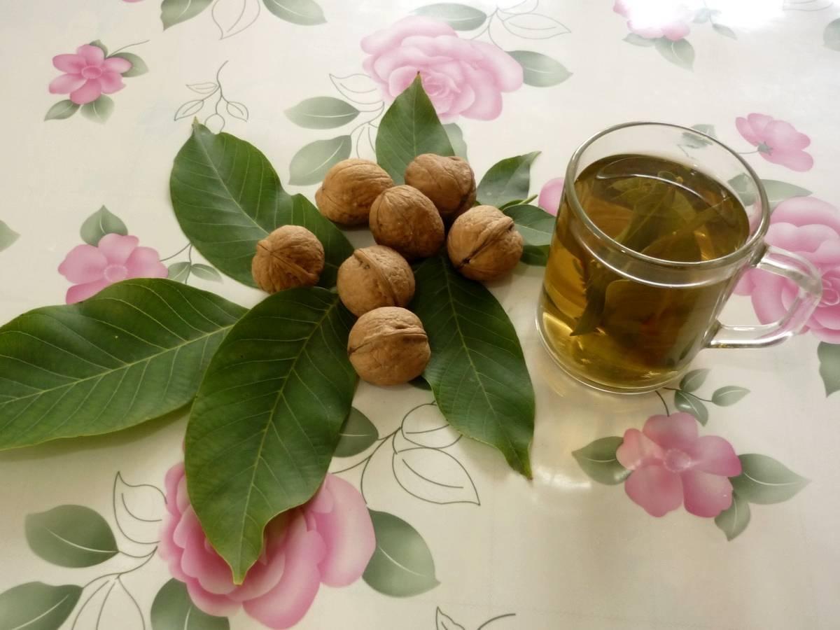 Скорлупа грецкого ореха: применение в народной медицине, рецепты