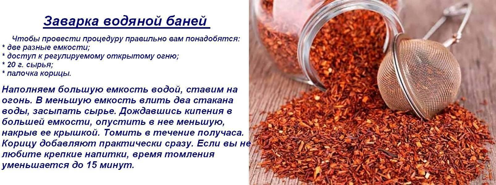 Чай ройбуш: польза и вред, отзывы, полезные свойства и противопоказания, состав