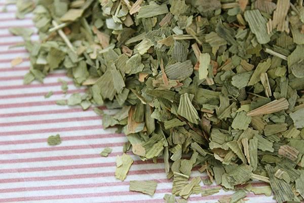 Чай из гинкго билоба: вкусовые качества, инструкция по завариванию и полезные свойства