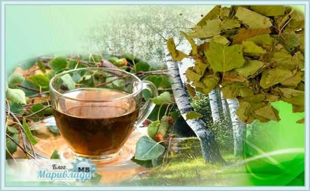 Отвар березы: коры, почек, листьев, показания к применению, польза и вред | народная медицина | dlja-pohudenija.ru