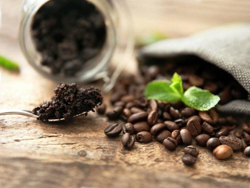 Кофейная гуща как удобрение: для каких растений