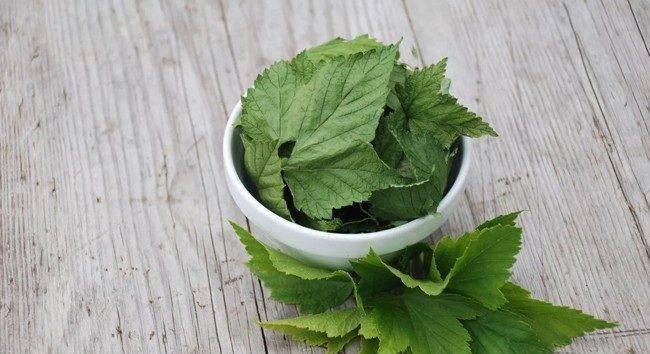 Польза чая из листьев смородины, показания к применению