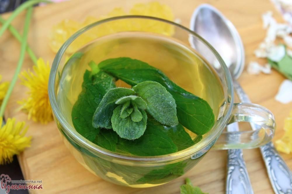 Чай с мятой: польза и вред, рецепты, как заваривать, отзывы | zaslonovgrad.ru