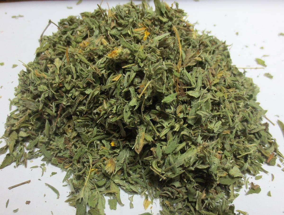 Курильский чай: лечебное применение