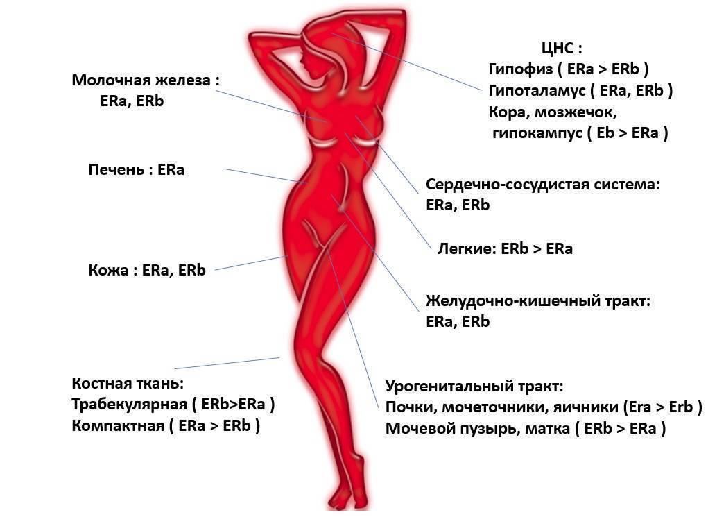 Влияние женских гормонов на мужской организм