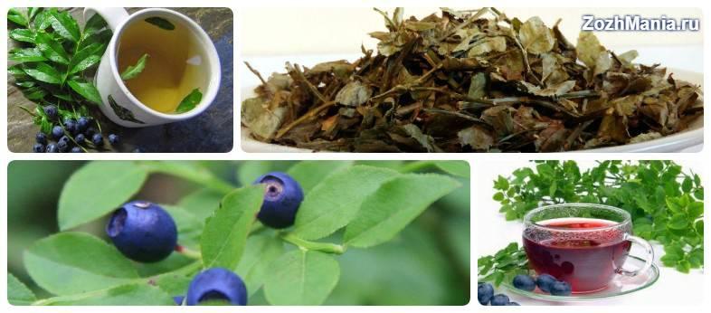 Когда собирать и как сушить листья лесной земляники. как приготовить чай
