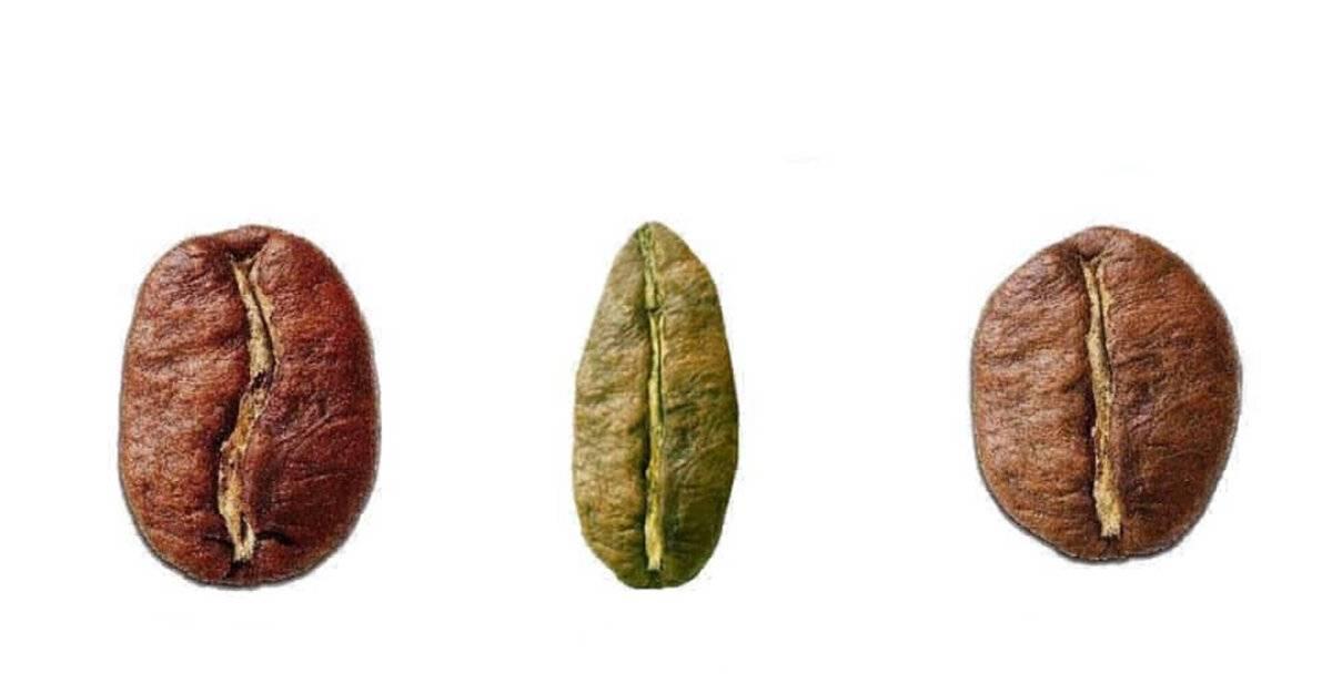 Классификация и виды кофе: виды зерен и степень обжарки