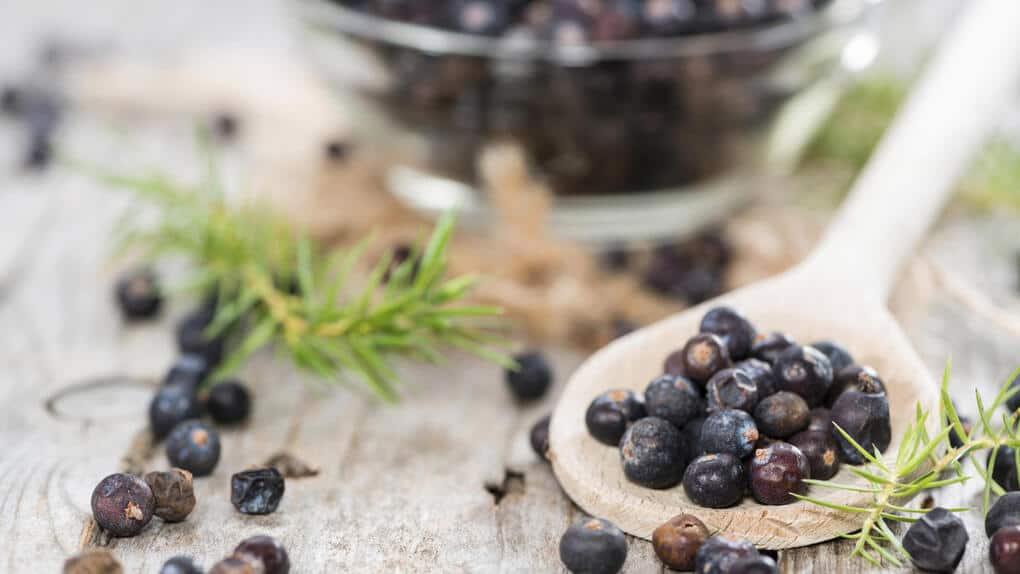 Чай из можжевельника: польза, противопоказания, как заваривать