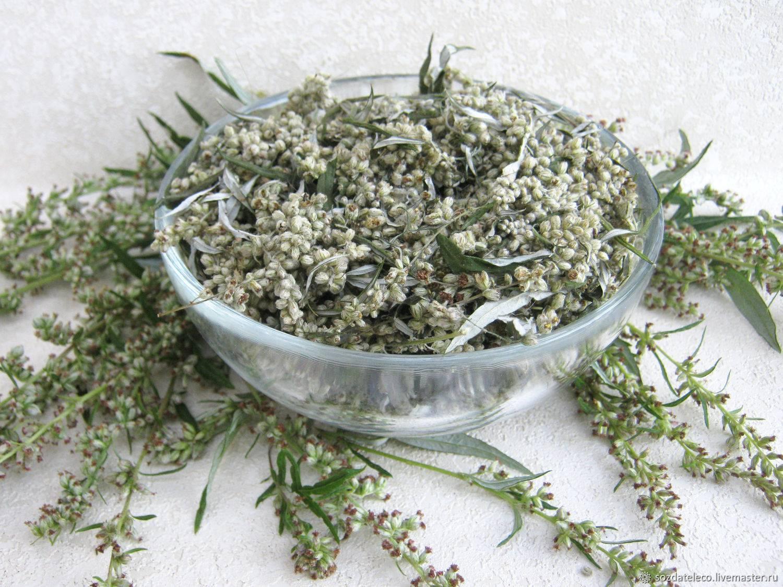 Полынь горькая: польза и вред для здоровья, применение