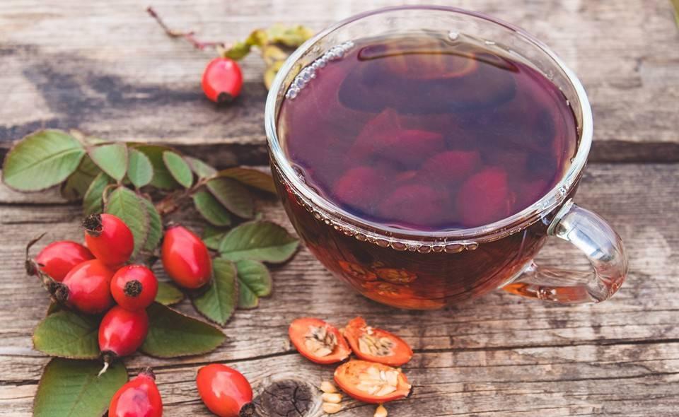 Чай с калиной: польза и вред, как правильно заварить, рецепты приготовления