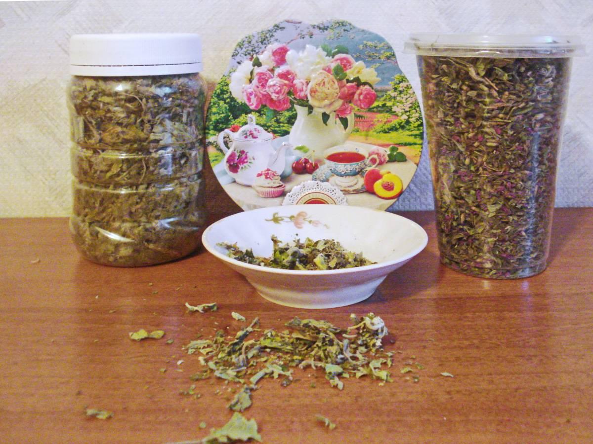 Как сушить мелиссу в домашних условиях: когда собирать, чтобы сделать заготовку для чая на зиму - до или после цветения, как правильно мыть и нужно ли это делать? русский фермер