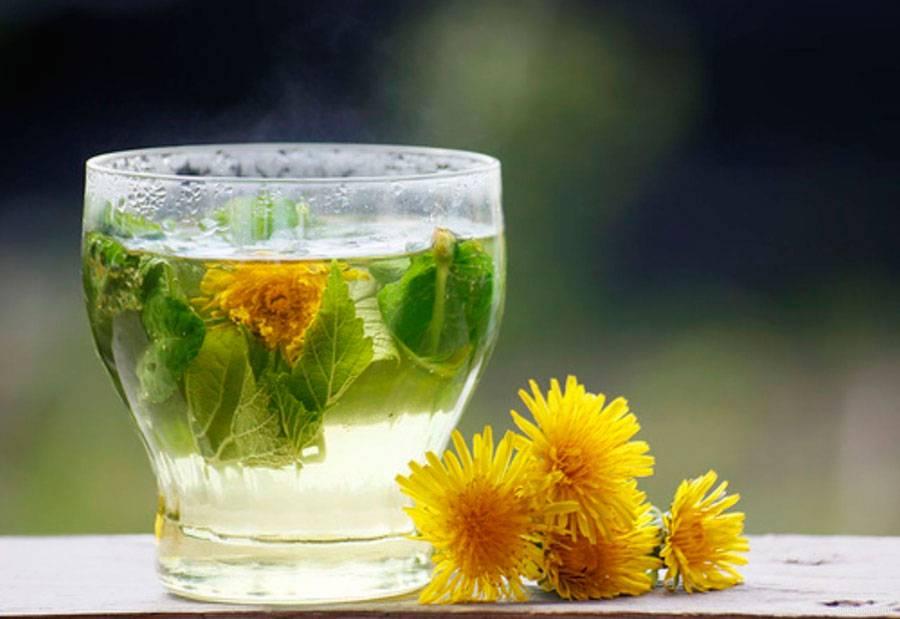 Полезные свойства чая из корней и листьев одуванчика