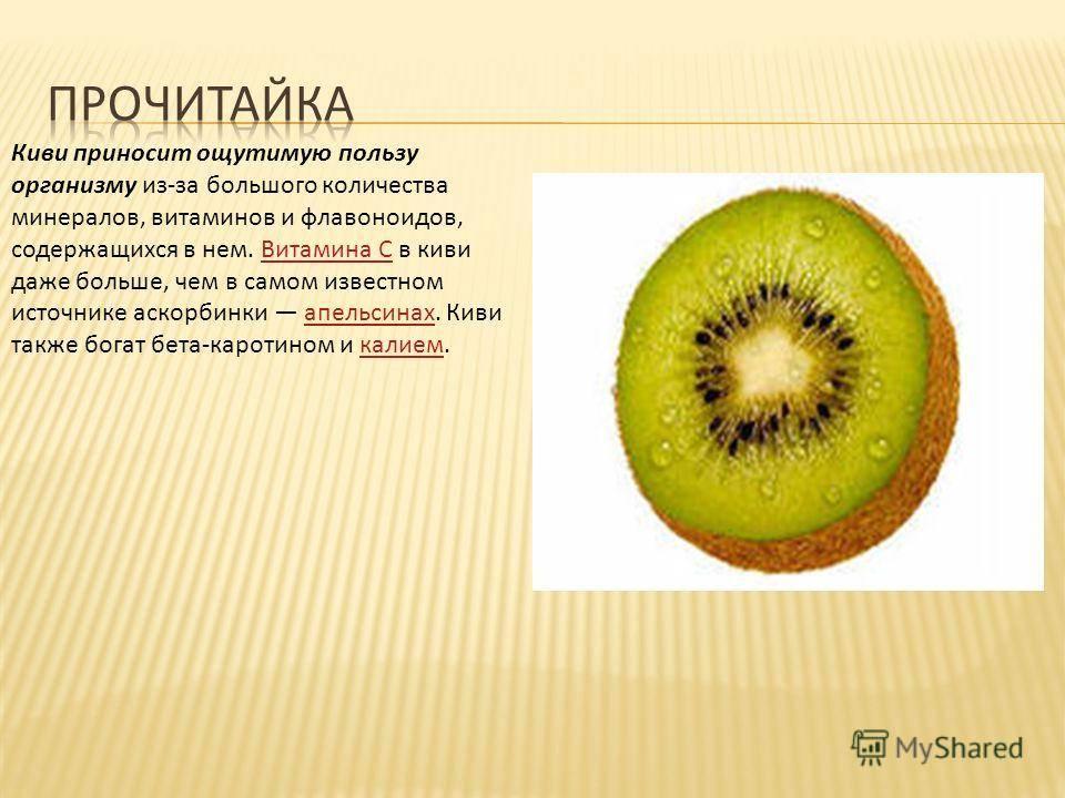 Киви фрукт - польза и вред для организма человека и его здоровья