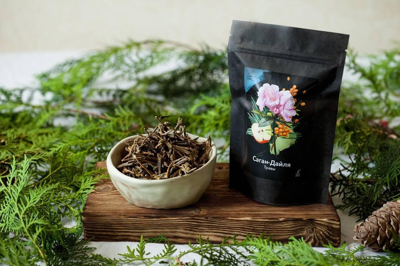 Все о лекарственной траве саган-дайля: как заваривать чай, полезные свойства, противопоказания и отзывы