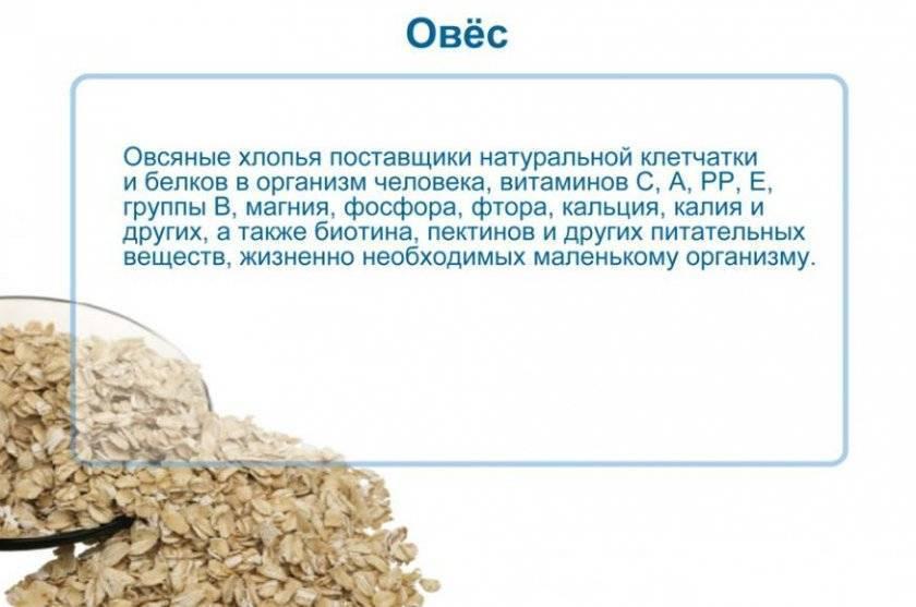 Отвар овса - лечебные свойства и противопоказания.