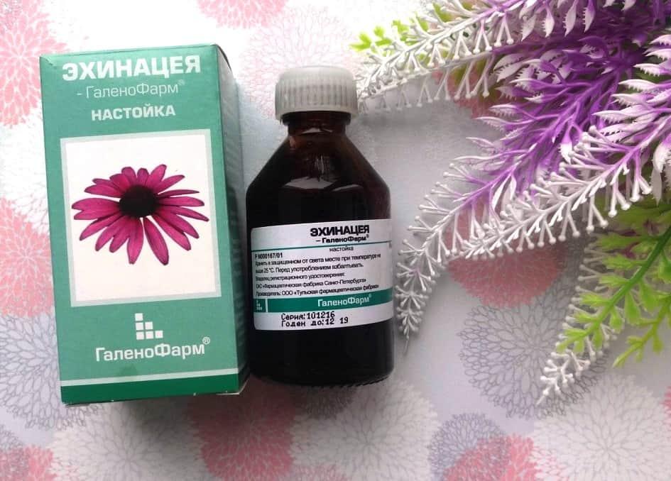Эхинацея для иммунитета: свойства, показания, противопоказания, применение | ✔ukrepit-immunitet.ru