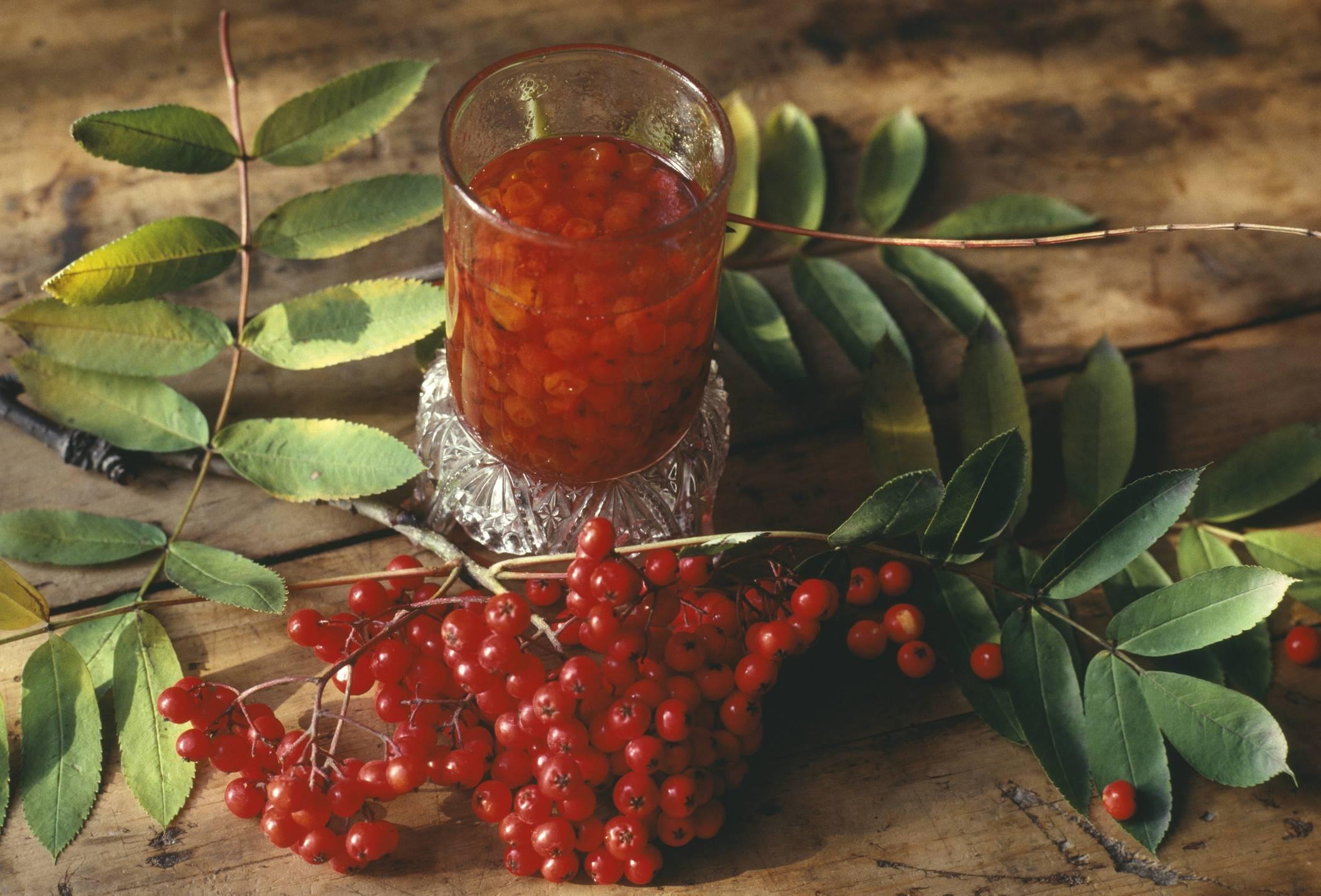 Шиповник и красная рябина лечебные свойства