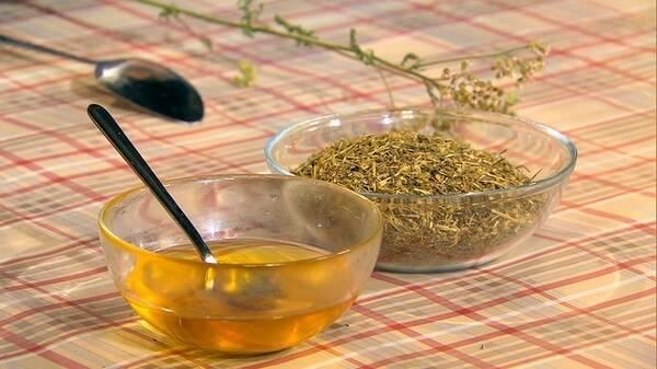 Трава тысячелистник: полезные свойства и противопоказания для женщин и мужчин, рецепты для лечения болезней