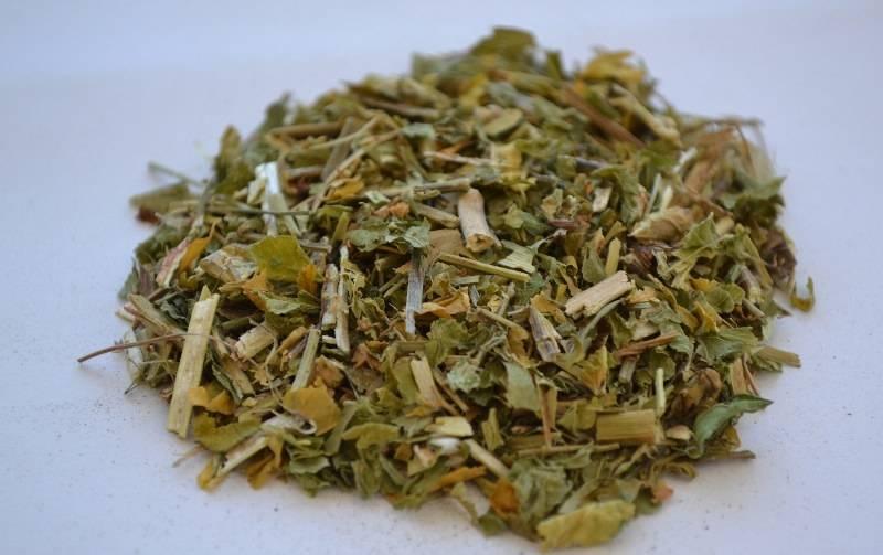 Полезные свойства астрагала шерстистоцветкового и народные рецепты