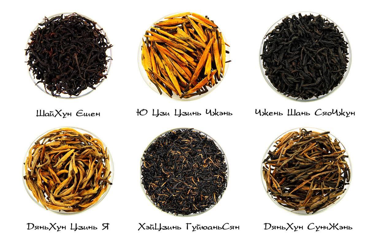 Настоящий китайский чай – виды, полезные свойства