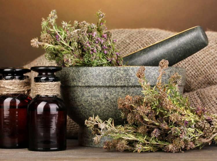 Вербена лекарственная: полезные свойства и противопоказания