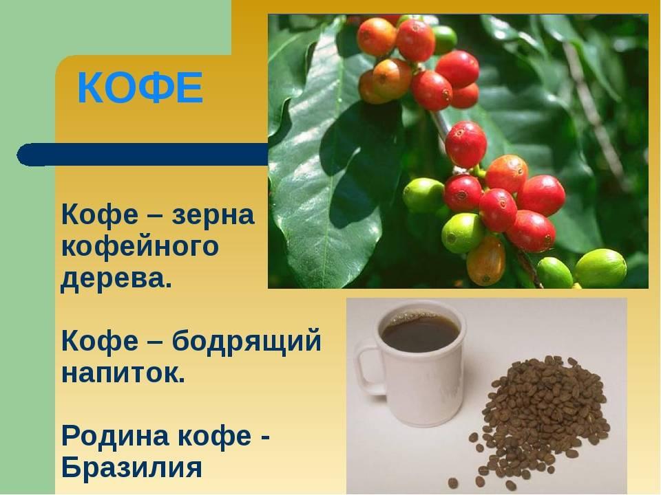 Слово «кофе»: какого рода, все секреты правописания и произношения