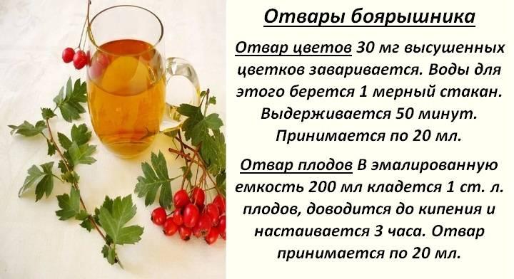 Чай из боярышника - как заваривать и пить, полезные свойства
