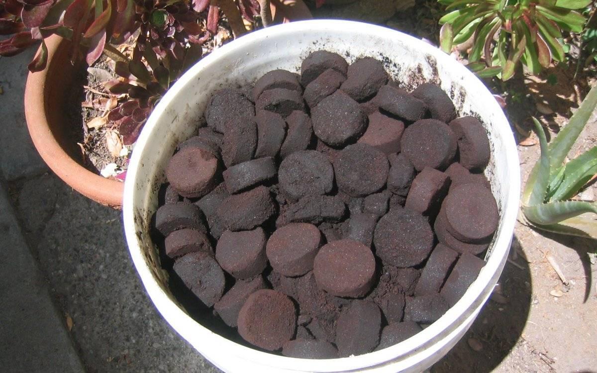 Спитой чай, как удобрение для огорода. применение спитого чая на даче