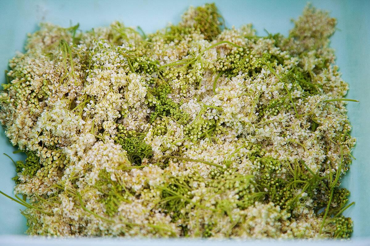 Таволга – лечебные свойства растения и показания к использованию