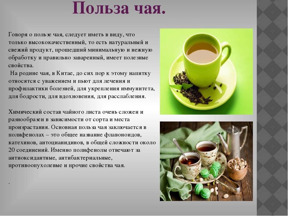 Виды пуэра – какой сорт чая лучше и вкуснее