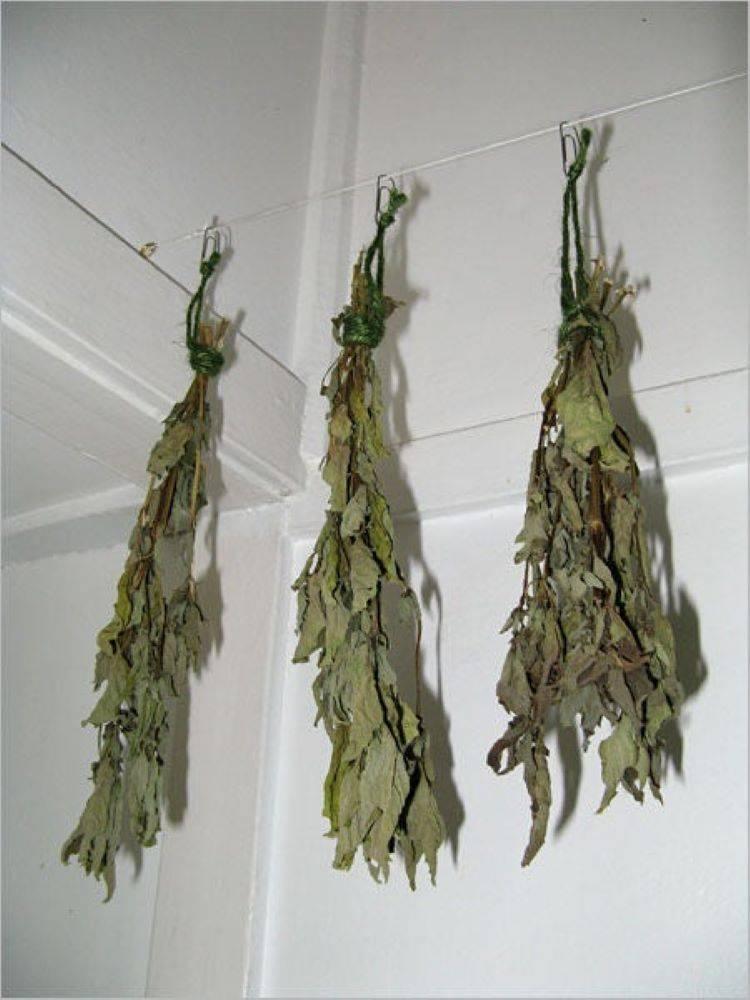 Как и когда собирать листья базилика и семена для сушки