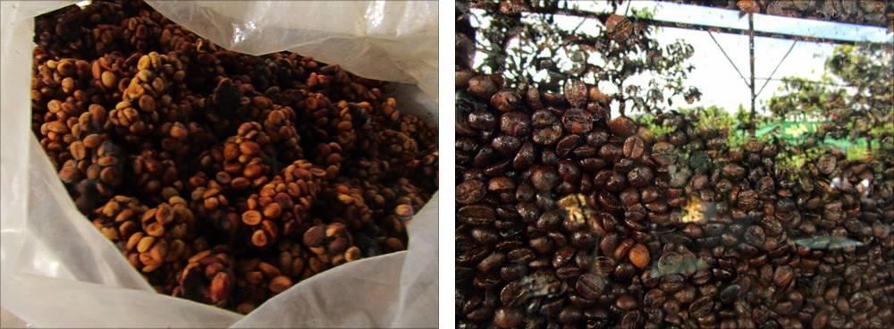 Кофе из вьетнама лювак изысканный и уникальный напиток