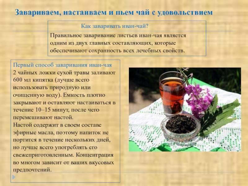 Состав монастырского чая для похудения: что входит, пропорции трав. как пить, принимать монастырский чай для похудения?