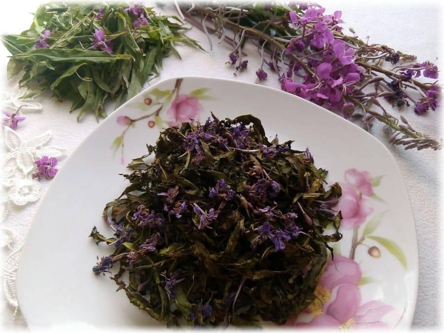 Копорский чай: польза и вред, как правильно заваривать