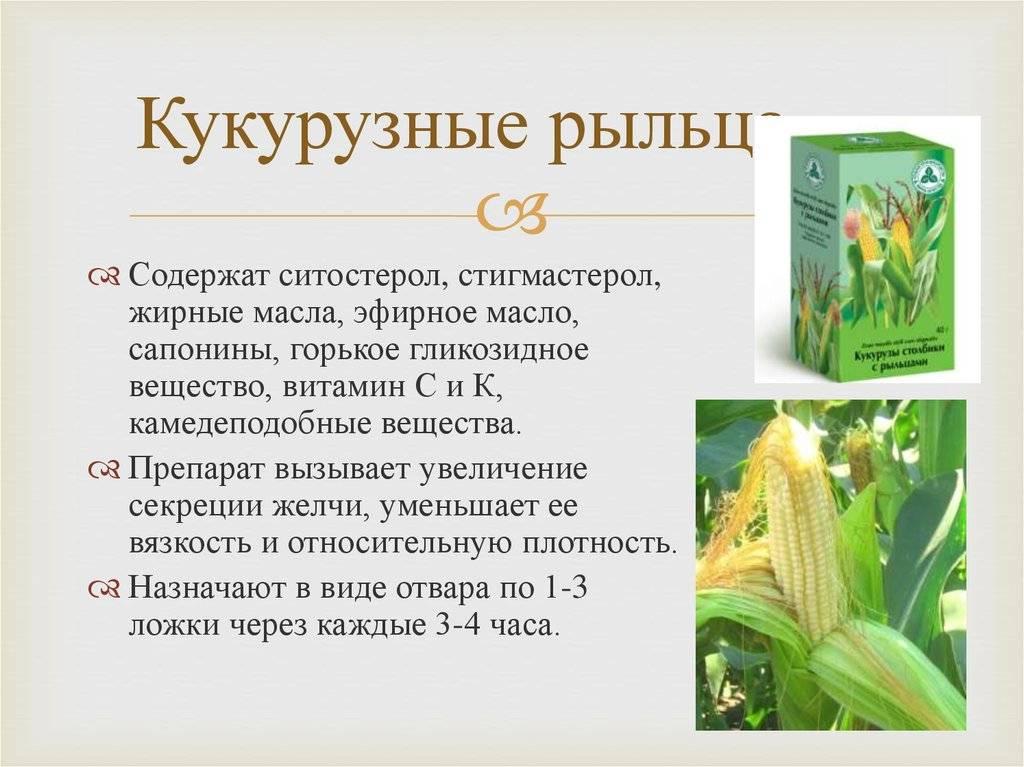 Кукурузные рыльца - лечебные свойства, от чего помогают, как правильно заваривать и принимать