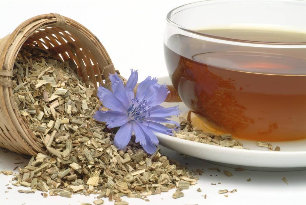 Чай цикорий: польза и вред (рецепты)