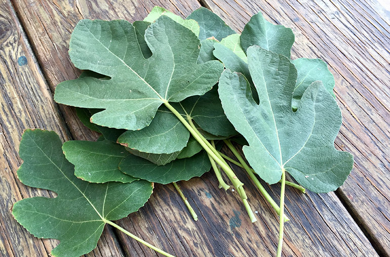 Чай из листьев инжира– полезные свойства
