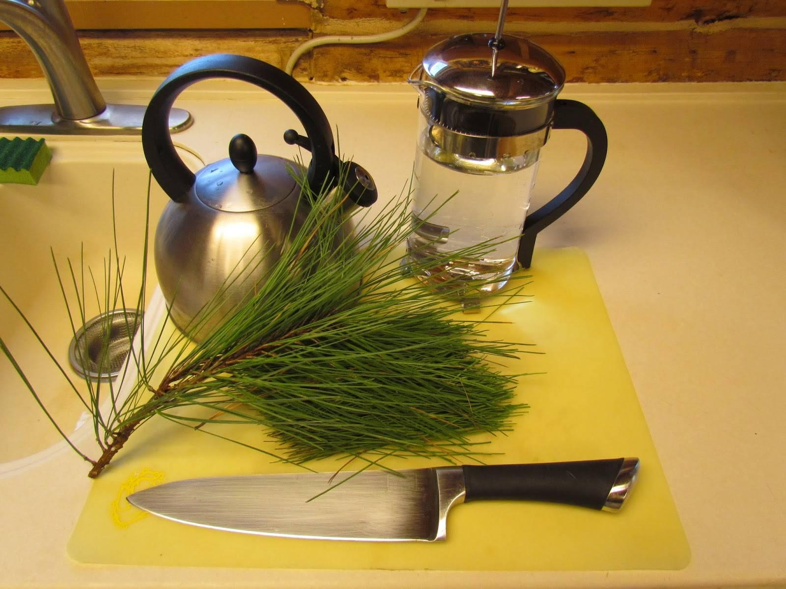 Польза хвойного чая » народные средства и народные рецепты