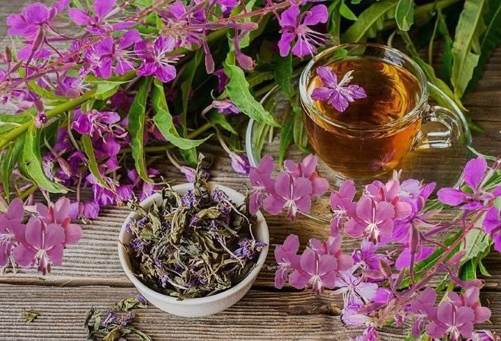 Иван-чай - полезные свойства и противопоказания, как заваривать и употреблять мужчинам или женщинам