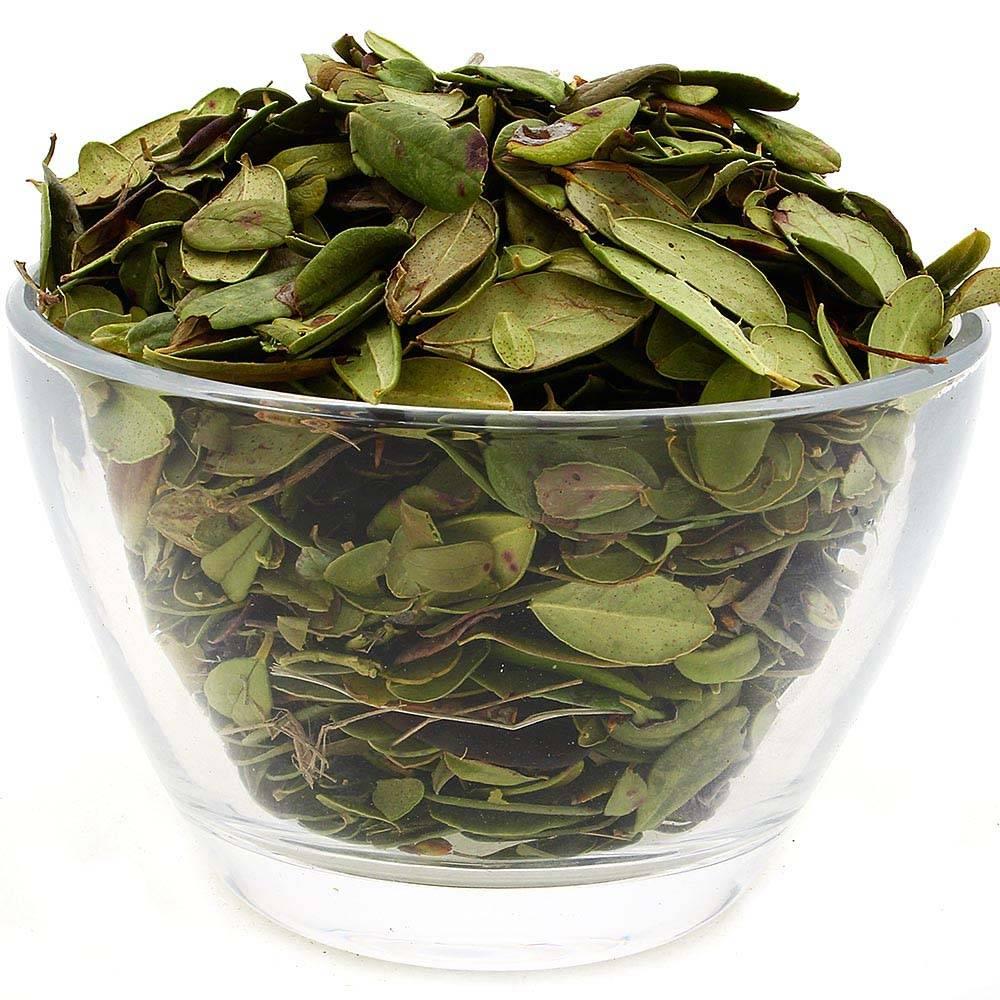 Брусничный лист - полезные свойства и противопоказания