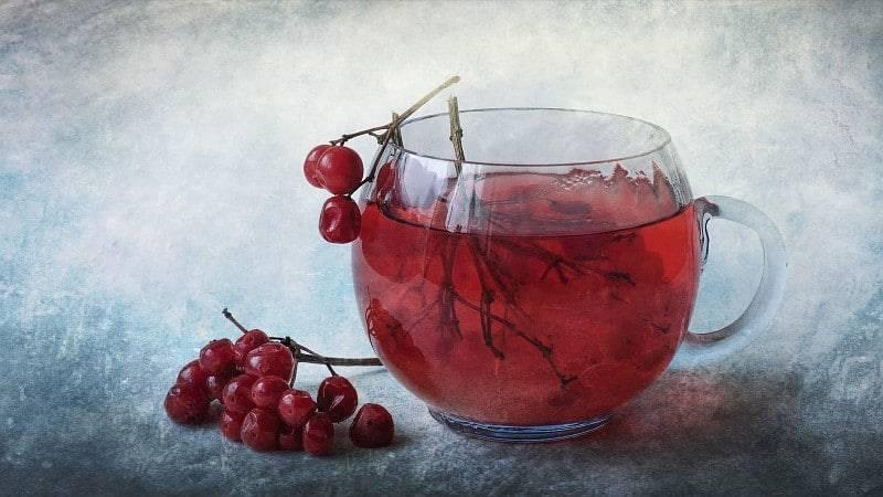 Чай с калиной - польза и вред для здоровья