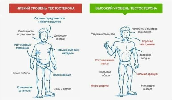 Кофе и тестостерон у мужчин - влияние кофеина на уровень гормона