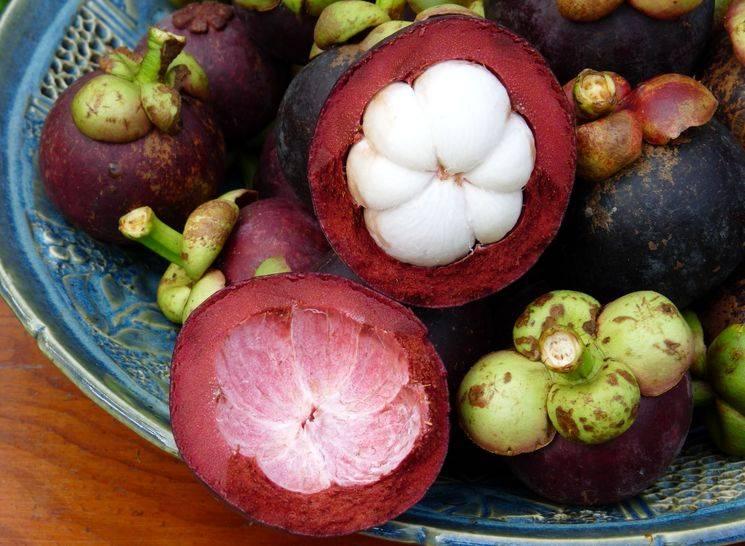 Мангустин полезные свойства и противопоказания как съесть фрукт