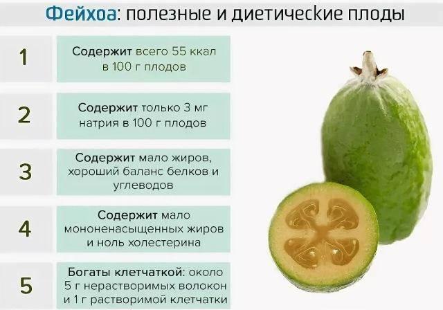 Фейхоа полезные свойства и противопоказания при диабете, рецепты