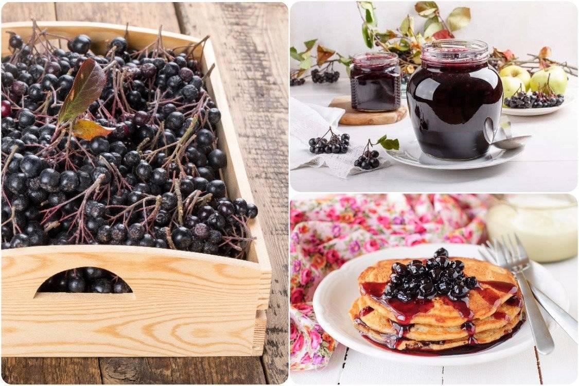 Чай из черноплодной рябины лечебные свойства и противопоказания