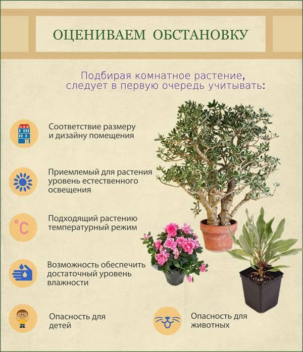 Мирт - лечебные свойства и применение в медицине - автор екатерина данилова - журнал женское мнение