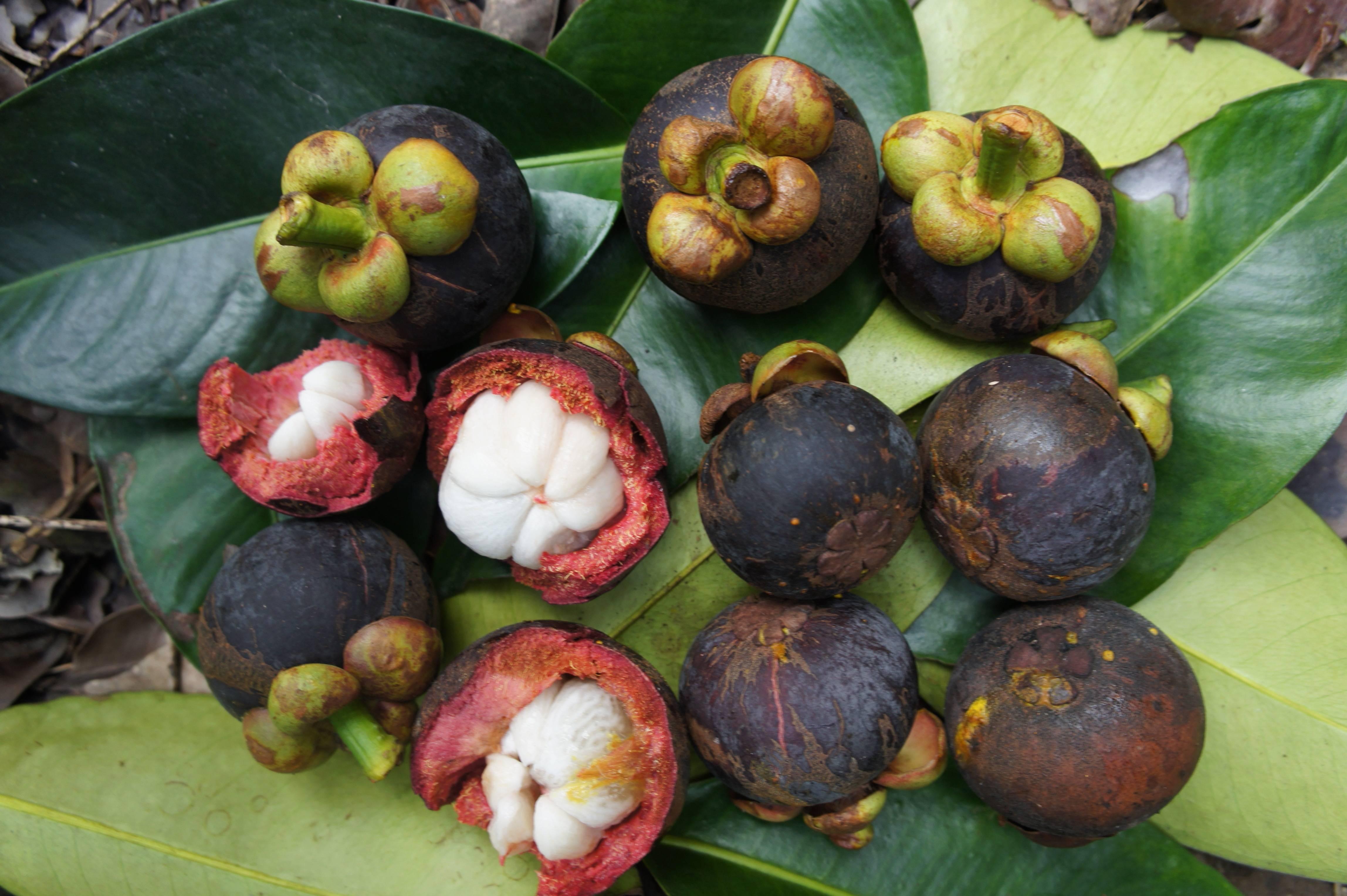 Фрукт мангустин : где растет, какой у него вкус и как правильно выбирать