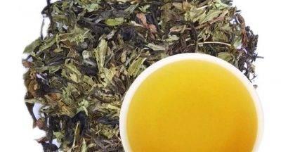 Саусеп чай — что такое, польза, вред, как заварить, можно ли вырастить